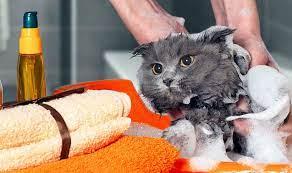 Cara Mengobati Gigitan Kutu Kucing dan Cara Memilih Obat Pembasmi Kutu Kucing yang Tepat